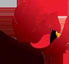 Cardinal Fasteners